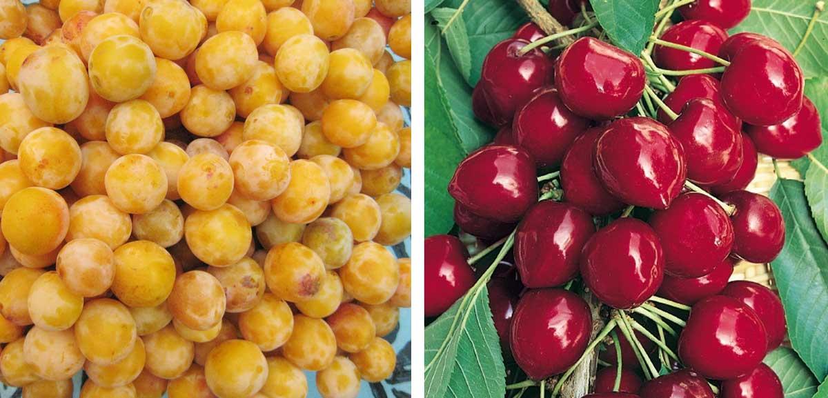 Baumschule pistoia for Piante da frutto pistoia